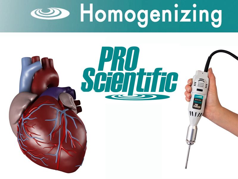 Cardiac Tissue Homogenization
